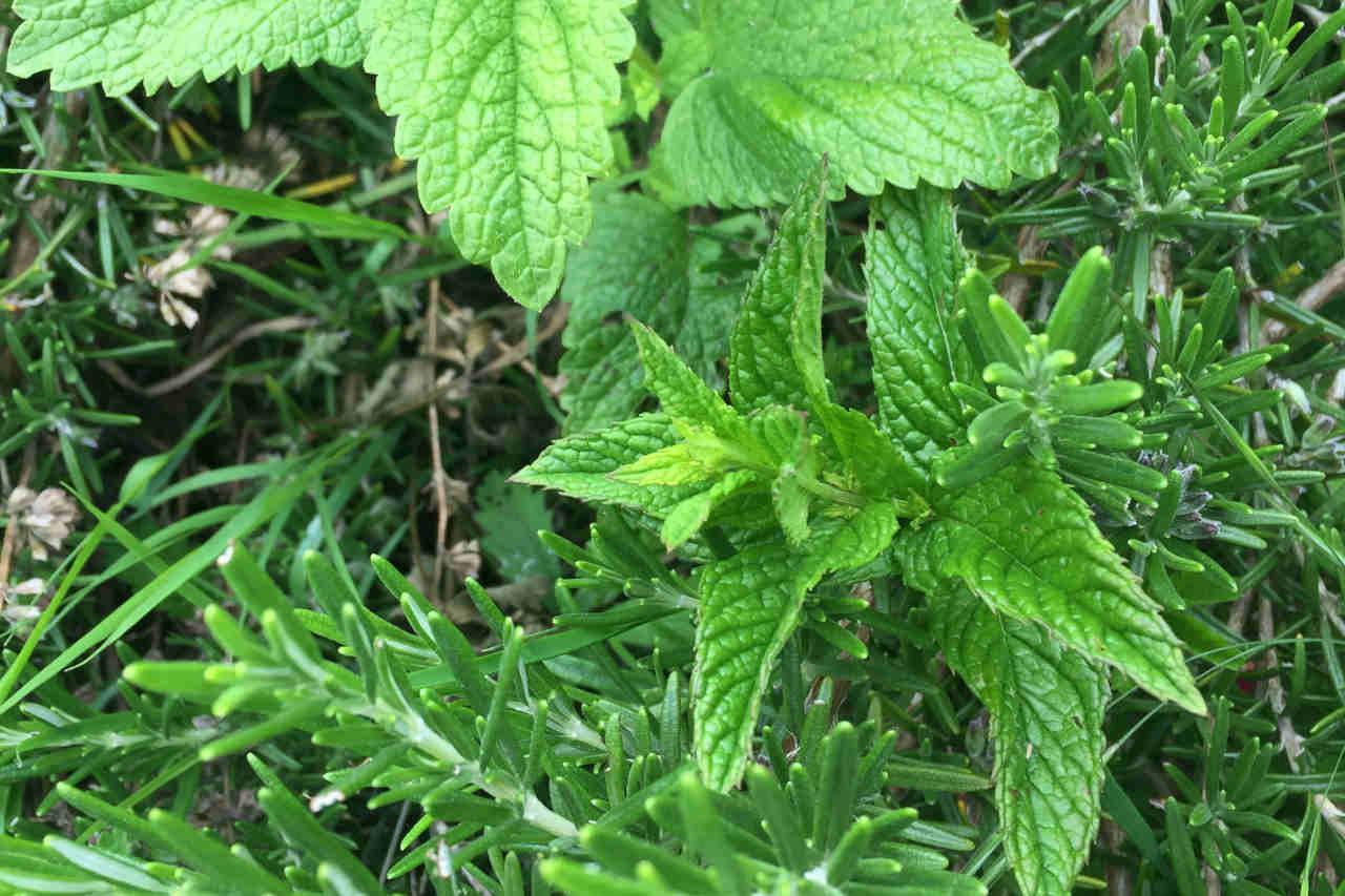 herbes-cecile-michaud-dieteticienne-rodez-decazeville-1280x853.jpg